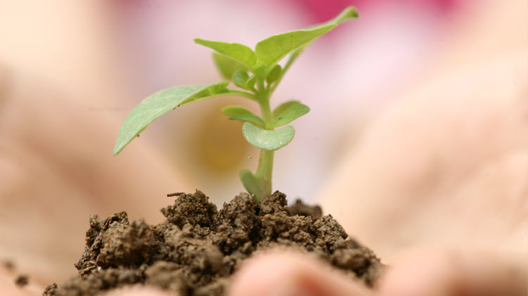 Preocupação ambiental e preservação da poluição SERLUSA